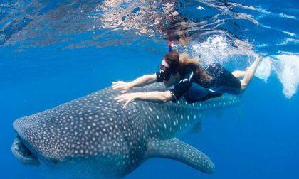 Conti, l'istruttore di Osio Sotto che vi porta a nuotare con gli squali