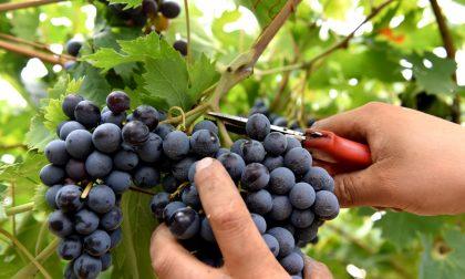 2017, l'annata del vino buono In alto i calici per Bergamo