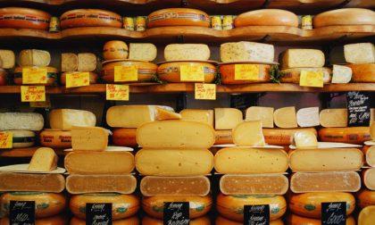 Cheese 2017, 8 formaggi da provare