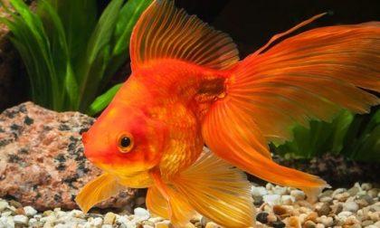 Il Center Bar Enoteca di Curno multato per due pesci nella boccia