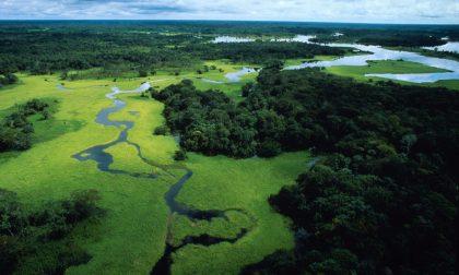 Foresta amazzonica, quale destino?