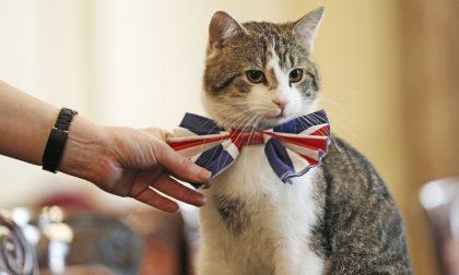 Inchinatevi a sua eccellenza Larry Catturatore di topi a Downing Street