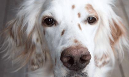 Un cane seppellito vivo a Zanica Denunciati due anziani del posto