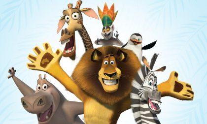 Il musical Madagascar debutta qui C'è pure Leiner Riflessi da X Factor