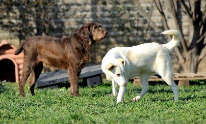 Il Comune rimborsa con 300 euro chi adotta un cane (450 se adulto)