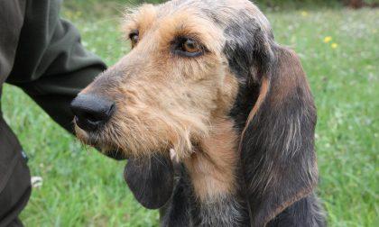 Abbandono dei cani nel Bresciano È emergenza: il 50% dalla caccia