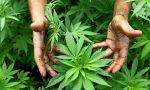 Valle Imagna, arrestato 38enne che coltivava marijuana in Romania