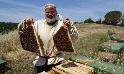 Paolo Fontana, il guru delle api