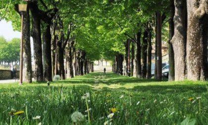 Viale delle Mura – Nino Alfieri