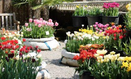 Pane e tulipani all'Orto Botanico Duemila fiori e mostra sul cibo
