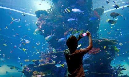 I 5 acquari più belli del mondo