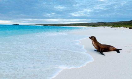 Posti fantastici e dove trovarli Le Galapagos, paradiso in terra