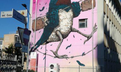 C'è una rondine in via Gavazzeni È la primavera della street art