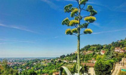 Mediterraneo o… Città Alta? – Vittorio Alessio
