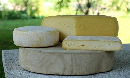 I vent'anni di Cristian Locatelli e la sua voglia di fare formaggi