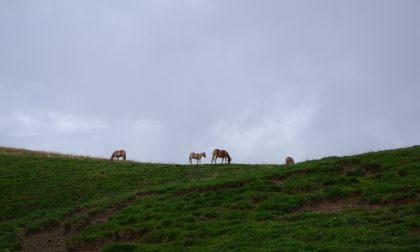 Monte Pora, l'escursione perfetta da fare anche con l'ombrello