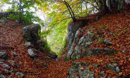 Tre Faggi e Madonna dei Canti I colori d'autunno dei nostri boschi