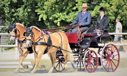 Emilio, vero fuoriclasse dello slalom su una carrozza trainata da cavalli