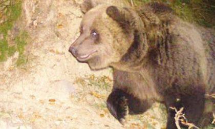 Difendiamo l'orso, e il mandriano?