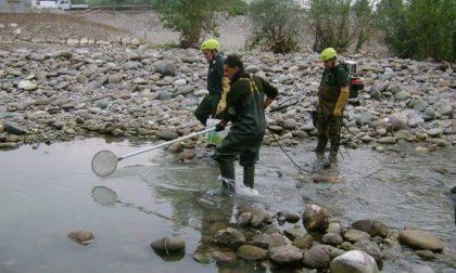Alzano: la centralina, il fiume e i ventimila pesci morti