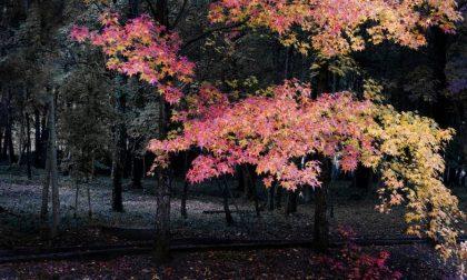 I mille colori dell'autunno a Endine – Francesco Gelati