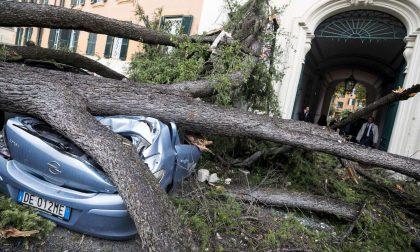 Il giorno della strage degli alberi (ma a Bergamo hanno resistito)