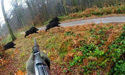 Come si vuole cambiare la caccia