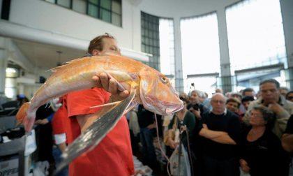 Pensieri segreti di una commessa Quelli che sul pesce la sanno lunga