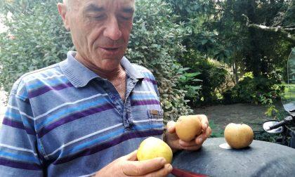Il segreto della Moioli? Le mele riscoperte e coltivate da suo papà