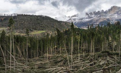 Quel vento a 140 chilometri orari che ha steso la foresta dei violini