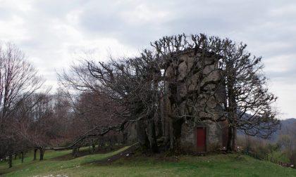 C'erano una volta, in Val Brembana un castello, una regina e un tesoro