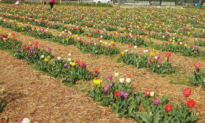 Risate e yoga in mezzo ai fiori Finalmente è sbocciata Tulipania