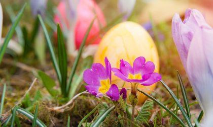 Cosa fare a Pasqua e pasquetta Dalle Via Crucis agli stambecchi