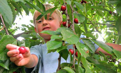 Fiori e frutti colti dal consumatore Spesa self service e a cielo aperto
