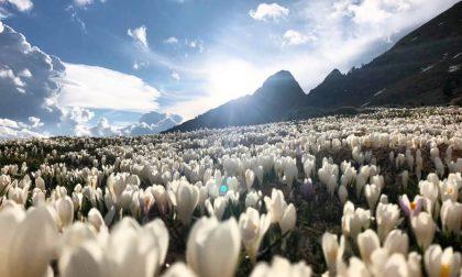 Fiori, montagne e sole a Roncobello – Claudia Boffelli
