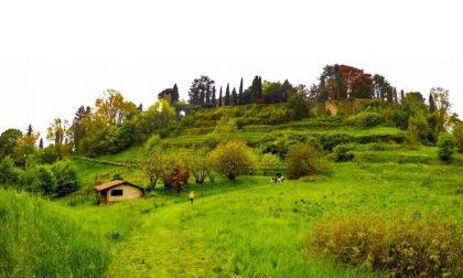 Il giardino di Palazzo Moroni – Chiara Marchesi