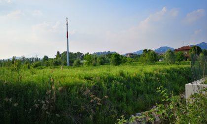 Il Comune ci rassicura: «Fidatevi i 7 mila alberi non moriranno»