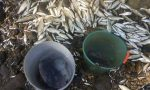 Serio, strage di pesci a Grassobbio Ma sulle responsabilità si annaspa