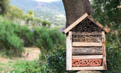 Una sagra dedicata agli insetti Si studiano e... si mangiano