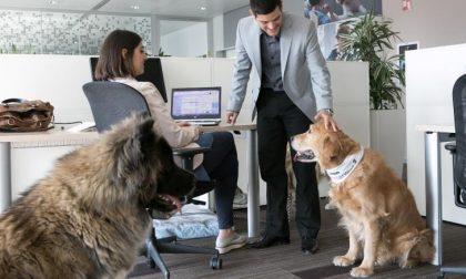 Animali domestici anche in ufficio per il 48 per cento dei bergamaschi
