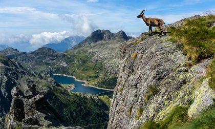 Sbagliano sentiero sul Pizzo del Becco e restano bloccate: soccorse due alpiniste