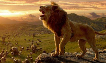 Il film da vedere nel weekend Il re leone: Disney, poche idee?