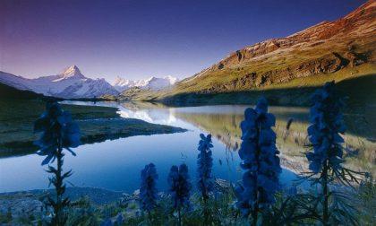 Posti fantastici e dove trovarli Oberland Bernese, ghiacci e rotaie