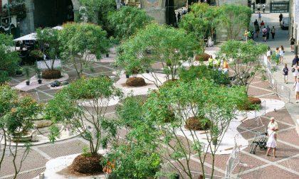 Piazza Vecchia ritorna verde con 35 alberi e 12mila vasi