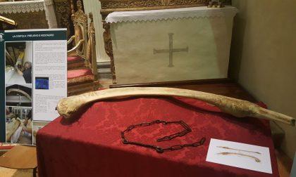 Colpo basso alla preistoria nostrana Sombreno, l'osso non è di mammut
