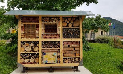 Ci salveranno le api di Capizzone (ma è stato un anno tragico...)