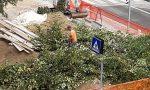 Zac! Pure ad Azzano via gli alberi E sui social esplode la polemica
