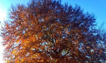 Magie d'autunno ad Aviatico - Diego Carrara
