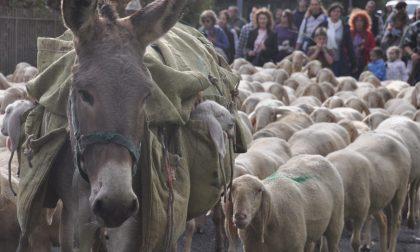 In arrivo dei giorni... da pecora Torna il Festival del Pastoralismo