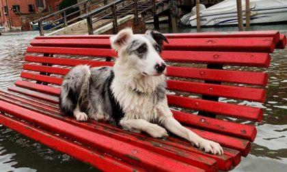 Cinque notizie che non lo erano Il cane abbandonato a Venezia